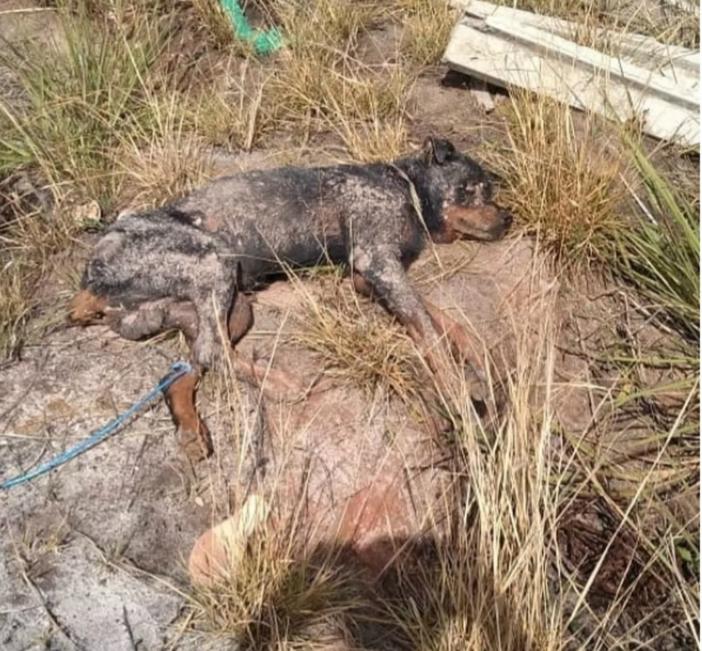 Cão foi enterrado vivo