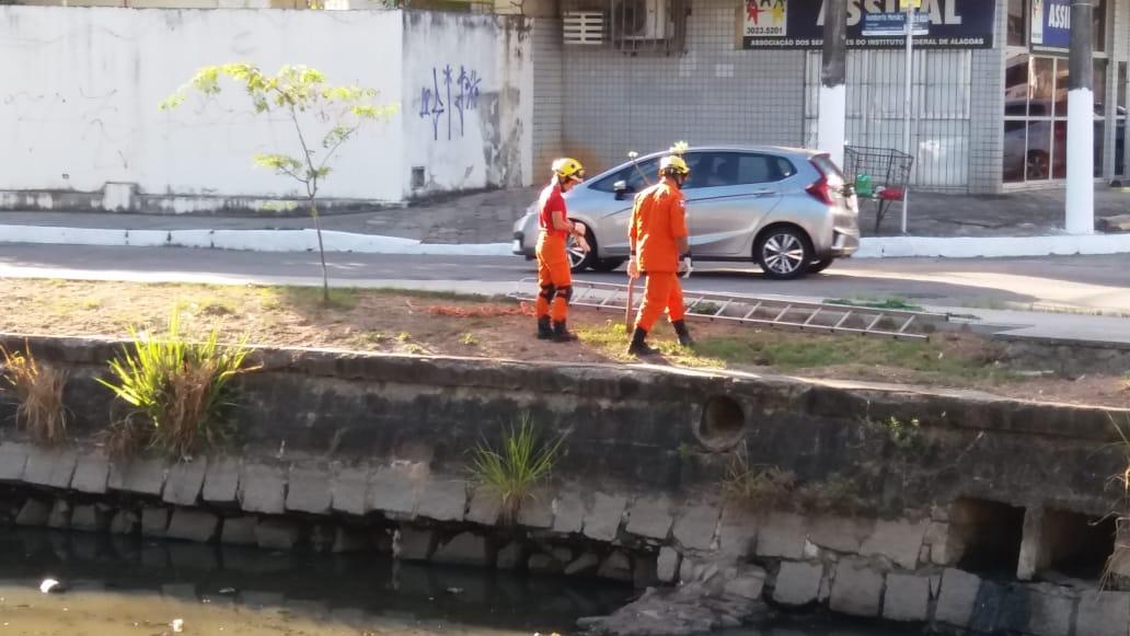 Bombeiros resgatam cachorro no Riacho Salgadinho