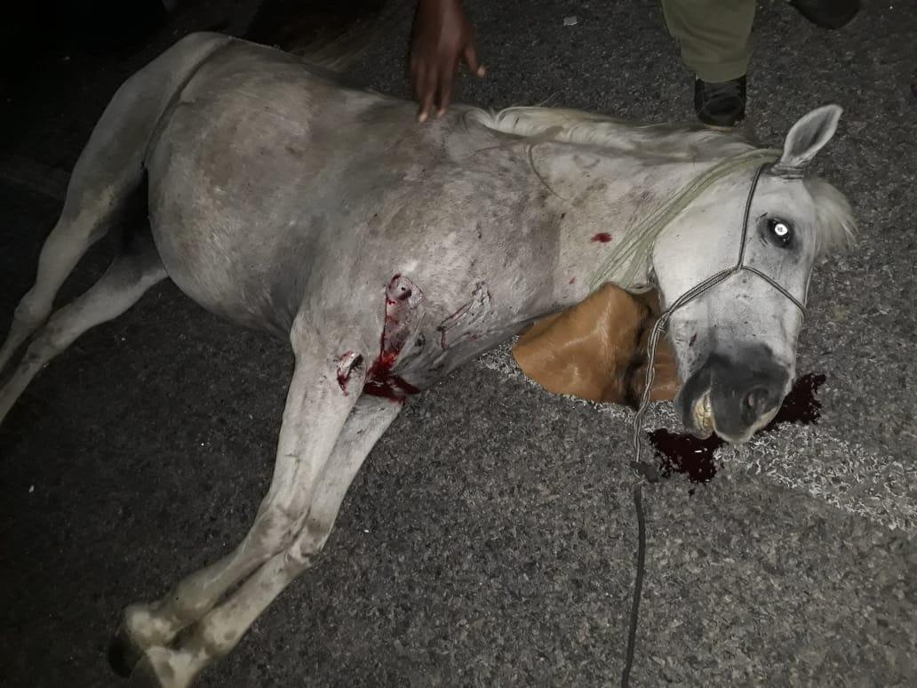 Agricultor que montava o cavalo ficou ferido. O animal morreu.